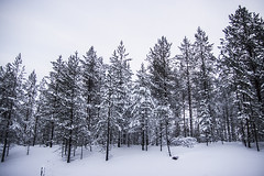 Auroras 77 (Auroras77 Teletransporte) Tags: viaje carretera nieve coche polar 77 crculo km suecia rtico