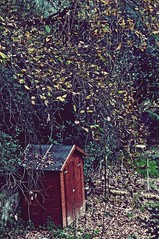 Shack (VioletHill-) Tags: wood winter brown cold color colour tree art nature leaves photography photo leaf oak colours colore arte artistic january like follow photograph shack fotografia artistica colori 2015