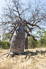 Gregory's Tree, Victoria River, Timber Creek, Northern Territory, Australia (Strabanephotos) Tags: tree creek river timber australia victoria northern territory gregorys