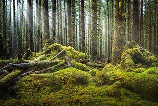Hoh Rainforest Log Jam