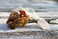 3/52: On a cold and frosty morning (judi may) Tags: wood bridge flowers roses 50mm frost dof tag bow ribbon bouquet hertfordshire driedflowers driedroses ickleford canon7d view52