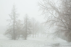 Winter Mist (Avelino Zepeda) Tags: winter mist ontario canada cold ice fog frozen guelph icestorm winterstorm
