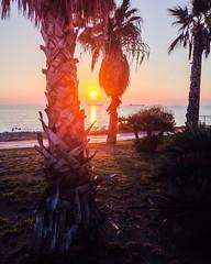 When the sun goes down... (a73xander90) Tags: sunset sea summer italy sun beach colors palms fun palm shore palmbeach