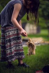 jumping chick (Jen MacNeill) Tags: chicken jump jumping chick littledoglaughedstories