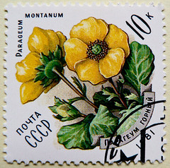 great stamp Russia 10k Alpine avens (flower, Parageum montanum / Geum montanum, Berg-Nelkenwurz, Benote des montagnes, Kuklik grski, Kuklk horsk, Mrior) timbre Union sovitique Russie selo Rusia posta pulu sellos Unin Sovitica francobollo Unione (thx for sending stamps :) stampolina) Tags: flower yellow russia stamps amarelo gelb giallo russian blume geel gul russie ussr cccp kuning rusia sellos gulur sovjet sssr russland briefmarken udssr ty pulu sowjetunion selos  galben timbres  timbreposte francobolli bollo   timbresposte sovjetunion  unionesovietica geltonas  uninsovitica  mrior alpineavens unionsovitique   geummontanum bergnelkenwurz  postapulu kuklikgrski benotedesmontagnes  parageummontanum kuklkhorsk