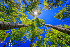 Up There (TranceVelebit) Tags: blue sky sunlight green up forest spring deep beech velebit dinaricalps paklenicanationalpark paklenicanp