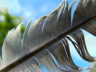 feather macro