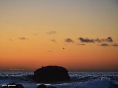 18/52 (Neeku) Tags: ocean ireland sunset sky sun bird nature birds silhouette rock landscape nikon rocks horizon eire atlantic shore outline donegal irlanda   northatlantic     neeku    wildatlantic neekushamekhi   nikond7000   thewildatlanticway thewildatlantic