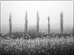 Springtime (Sandro Reinhard) Tags: bw 120 mamiya film analog 6x45 mittelformat m645 uebeschi