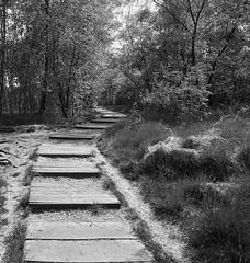 boardwalk - Holzsteg (Danyel B. Photography) Tags: wood bw white black nature forest minolta sony natur boardwalk sw marsh 28 24mm moor bog wald schwarz a7 weis holzsteg
