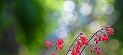 Spring fantasy (Pics4life.nl) Tags: pink light red green colors licht spring groen bokeh roze voorjaar