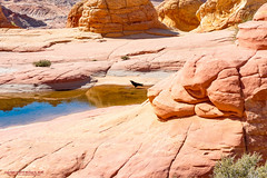 Around The Wave (mikerhicks) Tags: travel arizona usa southwest nature geotagged outdoors photography utah spring unitedstates desert hiking adventure event backpacking wilderness kanab thewave marblecanyon onemile coyotebuttesnorth vermilioncliffsnationalmonument geo:country=unitedstates camera:make=canon exif:make=canon geo:state=arizona exif:aperture=90 exif:focallength=35mm exif:lens=1835mm exif:isospeed=100 canoneos7dmkii camera:model=canoneos7dmarkii exif:model=canoneos7dmarkii sigma1835f18dchsma geo:location=onemile geo:city=marblecanyon geo:lat=3699470500 geo:lon=11200602833 geo:lon=11200602833333 geo:lat=36994705