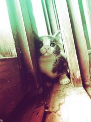 Cats Edition 7 - (22) (Robert Krstevski) Tags: pet cats pets cute animal animals cat photography kitten kitty kittens lovers macedonia kitties meow cuteness popular robertkrstevski robertkrstevskiblogspotcom