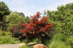 Catoctin Zoo ~ Japanese Maple - HTMT! (karma (Karen)) Tags: trees leaves rocks maryland paths thurmont frederickco htmt catoctinzoo