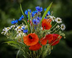 Flowers for Summer (berndtolksdorf1) Tags: flowers summer outdoor blumen bunt mohn margeriten kornblumen sommerstraus