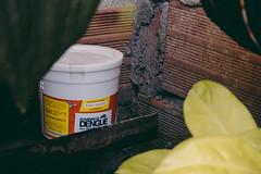 Liberacin  Los Sauces (Eliminar el Dengue Colombia) Tags: colombia mosquito bacteria virus barrio comunidad sauces dengue medelln antioquia salud bello aedes desafo udea liberaciones aegypti pecet antidengue