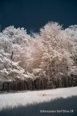 Bienne_DSC7901 (achrntatrps) Tags: trees light luz forest ir licht nikon arboles photographer suisse lumire arbres bern wald berne fort biel photographe baume bienne forst hoyar72 lachauxdefonds 720nm infrarouges d5300 dellolivo alexandredellolivo