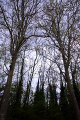 IMG_4487 (Irina Souiki) Tags: parcdesceaux france paris sceaux flowers nature parc park