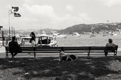 King-size bench (turinhurinov) Tags: sony a6000 ilce6000 sigma 30mm contemporary dog bench shadow sea bosphorus boat cloud sky