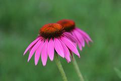(Ewa(Ewa)) Tags: fleur flower kwiat