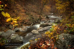 (winn.timothy59) Tags: autumn fall nature water leaves stream glow forrest tennessee runningwater smokymountains riocks