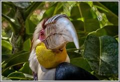 Toucan. (ro-co) Tags: zoo panasonic toucans fz200 bioparkspain