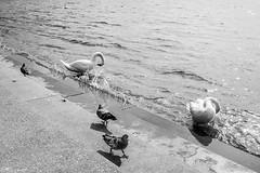 Paseo y bao (Anvica) Tags: lago constanza bregenz austria cines palomas agua water fuji blancoynegro blackandwhite xt1