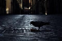 steady (TIBBA69) Tags: street strada backlight night notte steady urban city andreatiberini bokeh sfuocato canon