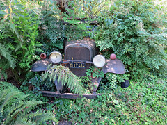 hiding car (kenjet) Tags: green lush vintage classic rust rusty car vehicle hidden hiding garden nature automobile d17414 17414 plate license licenseplate old