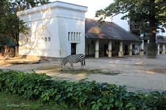 Zebra. Berlin Zoo. Germany. (Svitlana Clover) Tags: berlin germany europe vacation traveling autumn canoneos550d building zoo zebra animals trees leaves vineyard architecture white black green gray journey tour