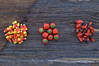 Halloween Candy (Pinkdragonflydeb) Tags: halloween candy candycorn pumpkin flatlay barnboard grouping fromabove three orange nikon