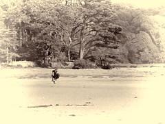 Une impression de libert (Vicky Bella) Tags: bretagne leconquet france libert cheval arbres plage beach horse horseriding horserider cavalier quitation