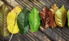 Autumn leaves (aapfarrington) Tags: photoshop red yellow orange green tree nature leaves autumn