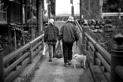 The road home (harumichi otani) Tags: leica blackandwhite bw dog home monochrome japan blackwhite streetphotography saitama monochrom chichibu japanphotography leicammonochrom japanbwphotography