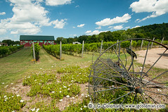 Yankee Farmlands  11 (J. G. Coleman Photography) Tags: building barn vineyard vines farm equipment grapes agriculture viticulture
