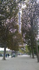 Eiffel tower between trees