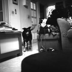 小瓜 (阿智) Tags: bw 120 film darkroom 黑白 fujiacros100 底片 暗房 沖片 rolleiflex35a