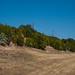 Trees_of_Loop_360_2014_005