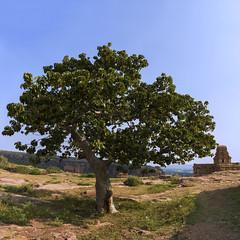 Malegitti Shivalaya, Badami (Ravikanth K) Tags: india tree architecture ancient afternoon hill north sunny historic unescoworldheritagesite unesco karnataka badami asi archaeologicalsurveyofindia shivalaya 500px malegitti