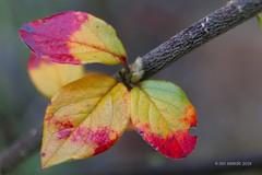 Herbstbltter ... (mo_meede) Tags: november flower macro eos licht flickr hamburg herbst makro sonne bltter garten farbig bunt zeit blten nass 2014 70d canon curslack drausen digital mo mos fotogarten meede