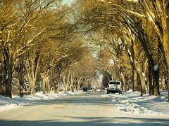 Golden Arches (howardpa58) Tags: street trees winter canada alberta reddeer mytown paulhowardphotography