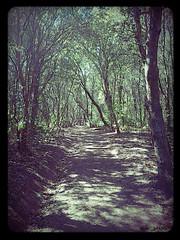 Path (slow_brains) Tags: park trees light summer sun history nature alberi woods path natura tuscany toscana sentiero livorno etruscan foresta prospective populonia necropoli piombino raylights