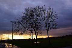Winter Sunrise (Michelle O'Connell Photography) Tags: trees winter sky tree sunrise scotland community streetlights glasgow stormy drumchapel g15 skyporn drumchapelglasgow kinfaunsdrive callyavenue drumchapellifesofar michelleoconnellphotography streetlightingmsilhouette