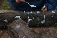 Bouchons à la cire sur chevilles de Shiitake