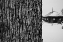 Day 10 (jwbeatty) Tags: winter blackandwhite bw snow cold nature landscape blackwhite illinois pentax photoaday lakezurich project365 pentaxart smc28mmmf28