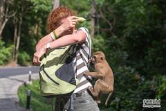 XOKA8665bs (Phuketian.S) Tags: monkey girl phuketian phuketphotographernet forumlinvoyagecom httpforumlinvoyagecom outdoor animal feed forest jungle thailand phuket samui krabi pattaya обезьяна лес джунгли таиланд пхукет самуи краби паттая девушка корм еда