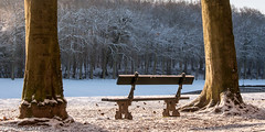 Time to think (Mike Y. Gyver) Tags: snow public nikon neige parc banc quietude