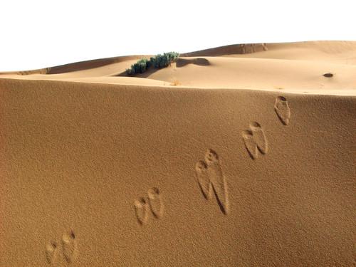 Sand, Sand und nochmehr Sand
