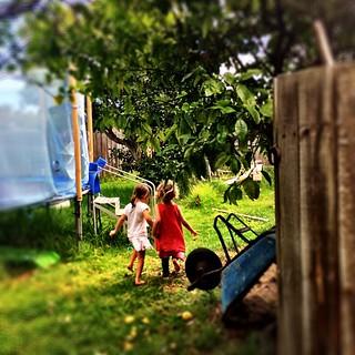 016/365 • going to look for eggs • #4yo #hastings #friends #backyard #chooks #morningtonpeninsula