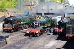Bridgnorth steam line-up. (Keith Wilko) Tags: shropshire skip flyingpig southernrailway steamtrains gwr lms severnvalleyrailway bridgnorth steamengines britishrailways engineshed railwaylines 7812 2857 salop uksteam 34053 43106 sirkeithpark erlestokemanor severnvalleyrailwaybridgnorth gwrsteam bridgnorthsvr bridgnorthshed steamintheuk svrsteam bridgnorthdepot svrbridgnorth loco2857 svrtrains svrlocomotives shropshiresteamtrains railwaysinshropshire shropshiretrains severnvalleyrailwaysteamlocomotives